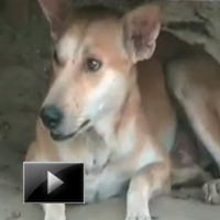 dog today, man's best friend, boat capsized, dog saved two people, news, videos, ibtl