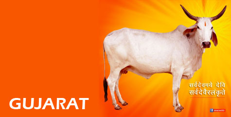 Gujarat, jail, cow slaughter, The Gujarat Animal Preservation, cow meat