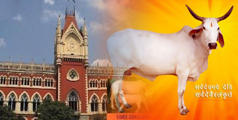 Kolkata, High court, Bans Open cow slaughter, Bakrid, Mr J. N. Patel and Mr. Ashim Kumar Roy