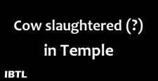 Cow slaughtered in temple, Muslim miscreants at Kerala, Cow slaughter, Cow slaughtering, IBTL