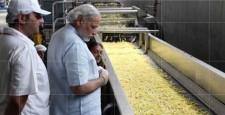 India's biggest food processing plant, Vadnagar sultanpur, himalayan, himachal pradesh, ibtl