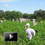 Devinder Sharma, Patanjali hardwar, baba ramdev, FDI, organic farming, rajiv dixit video,