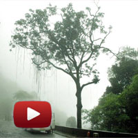 glimpse of Kerala, God s own Country, Wayanad, Kerala, lush green forests, rivers, streams, gorges, waterfalls, indian monsoon, green cover, roaring gorges, ibtl video of the day