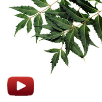 Global trade in neem products, US $ 500 million, Hidden treasures of Neem, devinder sharma baba ramdev, bharat swabhiman,  pest control, medicines, pharmaceuticals, toiletries, ibtl video